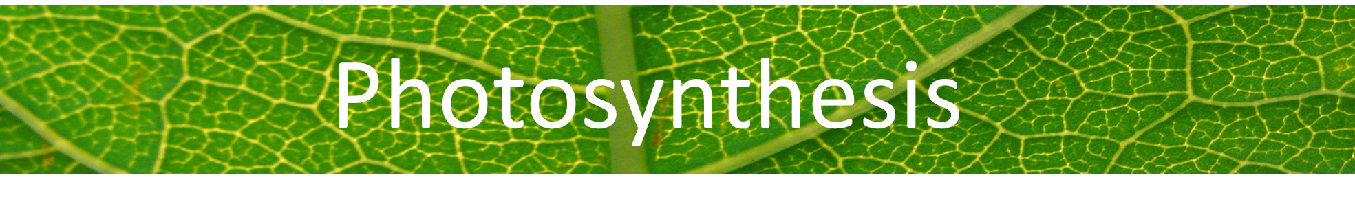 photosynthesis web banner